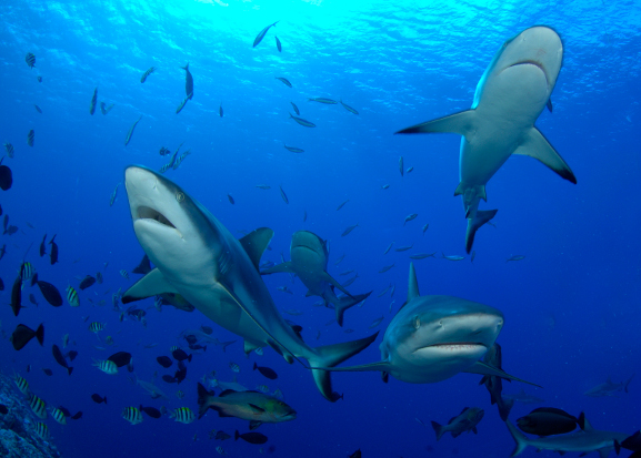 Our buddy Werner Thiele, from the Tyrol, is a genius photog.